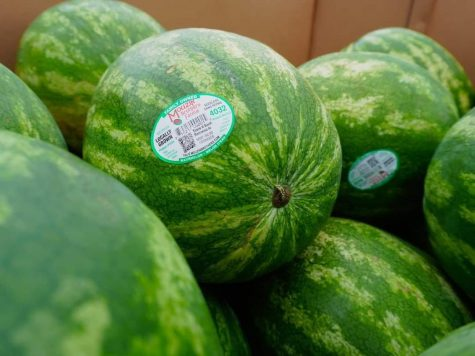 A crop of watermelon from the recent harvest at Mouzin Farms.